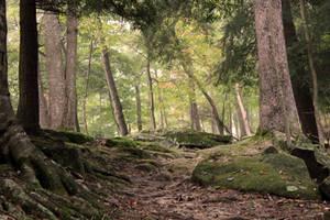 Forest Stock 09 by Thy-Darkest-Hour