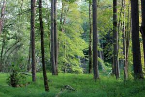 Forest Stock 10 by Thy-Darkest-Hour