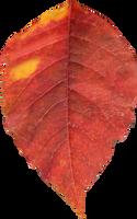 Leaf PNG 03 - Stock by Thy-Darkest-Hour