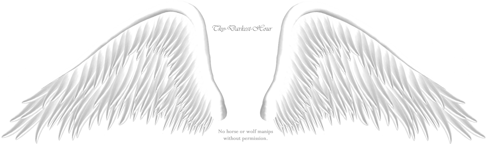 Elegant White Wing PNG by Thy-Darkest-Hour