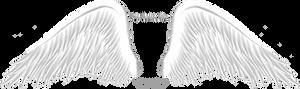 Elegant White Wing PNG