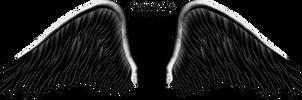 Elegant Black Wing PNG