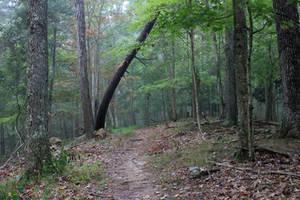 Forest Stock 17 by Thy-Darkest-Hour