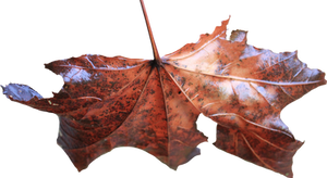 Leaf 02 - Stock by Thy-Darkest-Hour