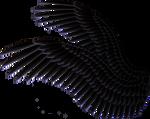 Double Spread Wings - Black
