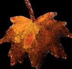 Leaf PNG 04