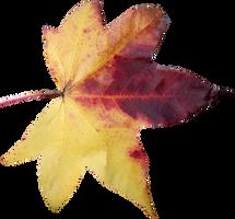 Leaf PNG 05 by Thy-Darkest-Hour