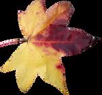 Leaf PNG 05