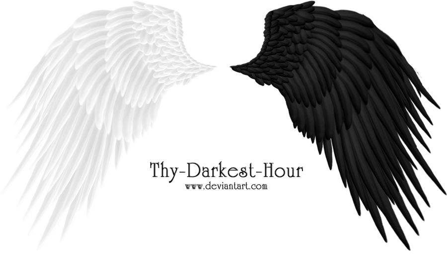 Angel Wings 08 PNG by Thy-Darkest-Hour