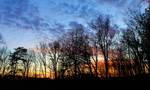 Sunset Woods 02