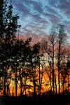 Sunset Woods 05