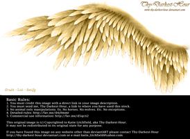 Winged Perfection - Golden by Thy-Darkest-Hour