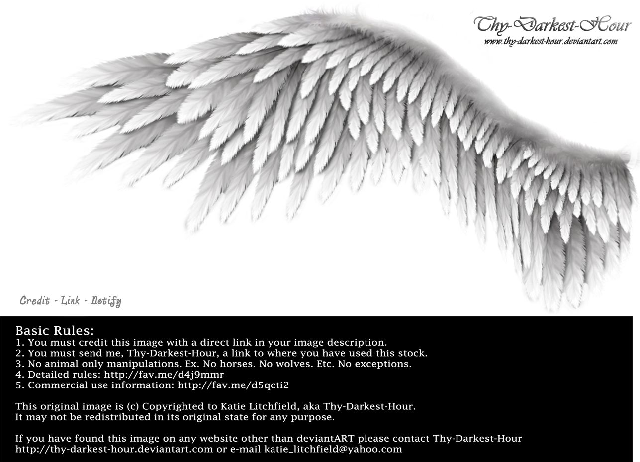 Winged Perfection - Silver