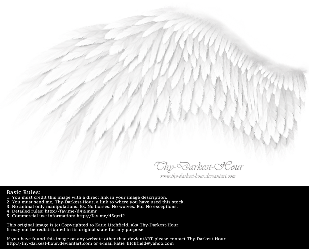 Romantic Wing - White by Thy-Darkest-Hour