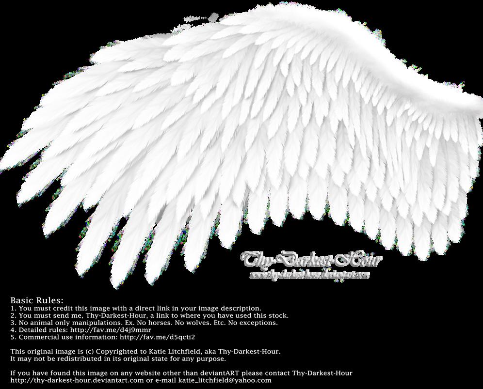 Romantic Wing - White by Thy-Darkest-Hour