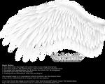 Romantic Wing - White