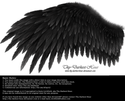 Romantic Wing - Black by Thy-Darkest-Hour