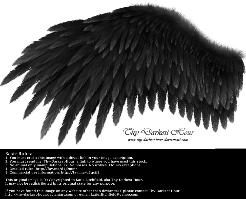 Romantic Wing - Black by Thy-Darkest-Hour