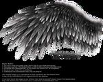 Romantic Wing - Black-Gray