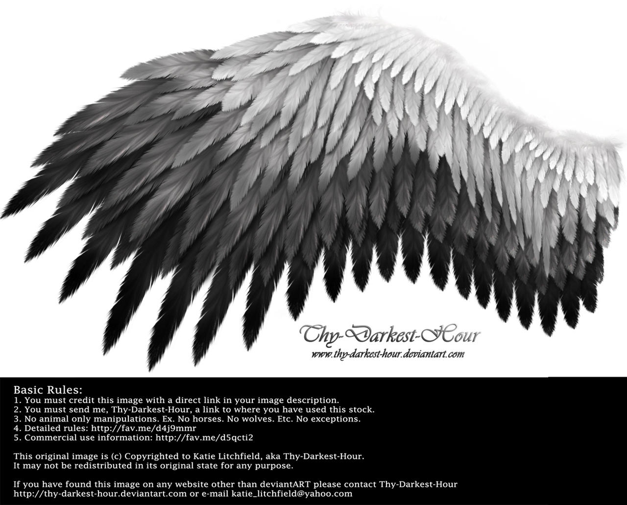 Romantic Wing - White-Black by Thy-Darkest-Hour