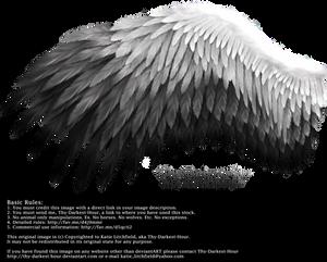 Romantic Wing - White-Black