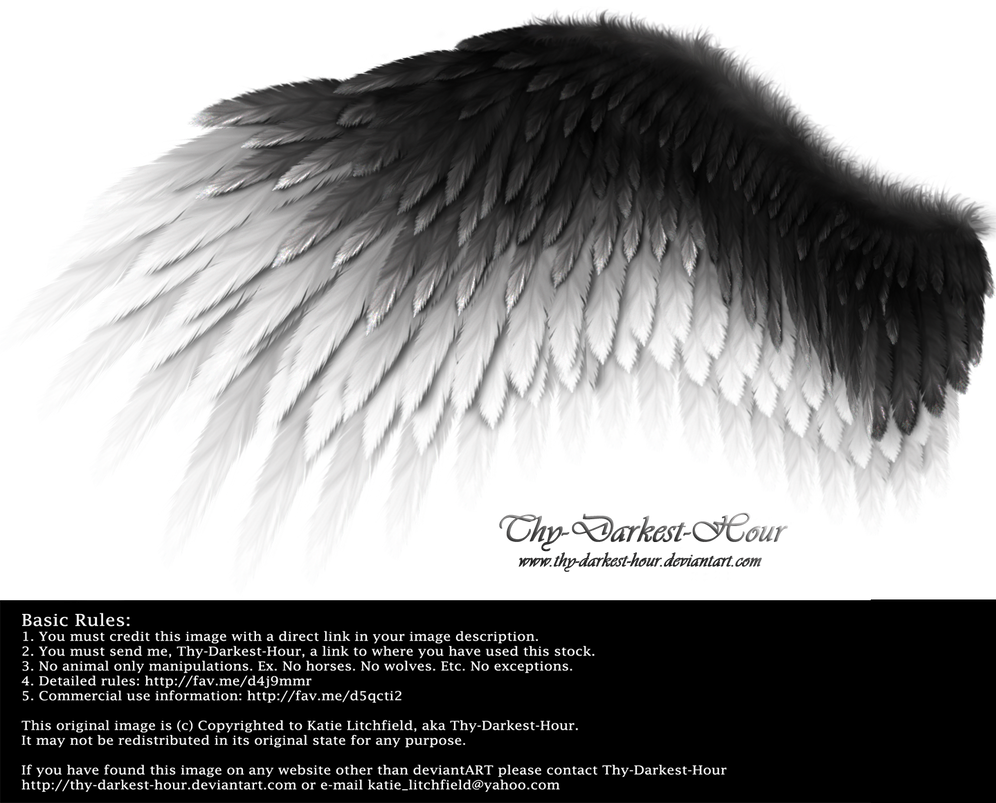 Romantic Wing - Black-White by Thy-Darkest-Hour