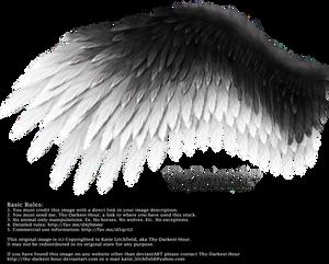 Romantic Wing - Black-White
