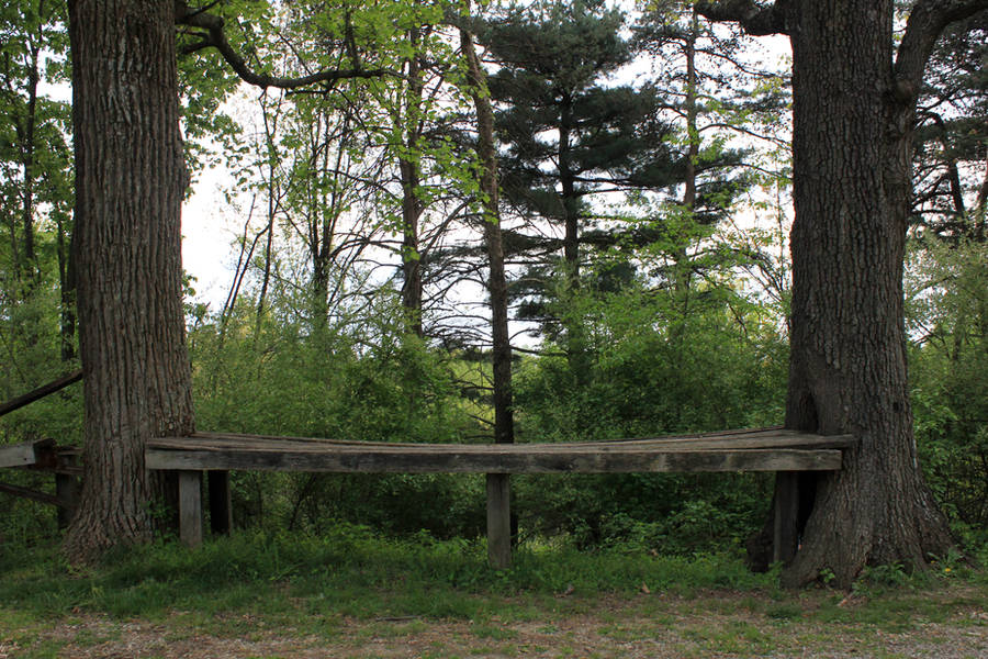 Bench Between Trees by Thy-Darkest-Hour