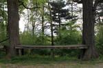 Bench Between Trees