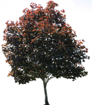 Tree PNG 01