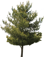 Tree PNG 02 by Thy-Darkest-Hour
