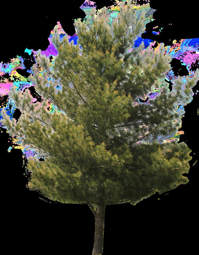 احدث ملحقات الفوتوشوب 2019_سكرابز اشجار