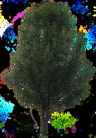 Tree PNG 03 by Thy-Darkest-Hour