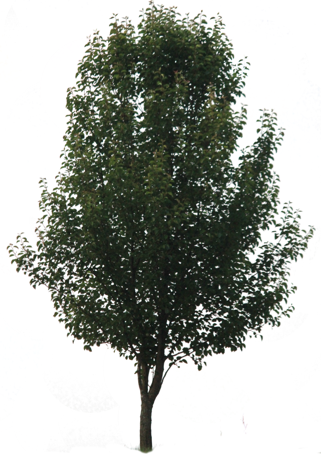 Tree PNG 02 by Thy-Darkest-Hour on DeviantArt for Park Tree Png  54lyp