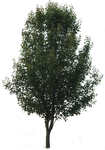 Tree PNG 03