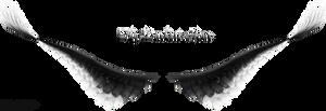 Upturned Wings - Black-White