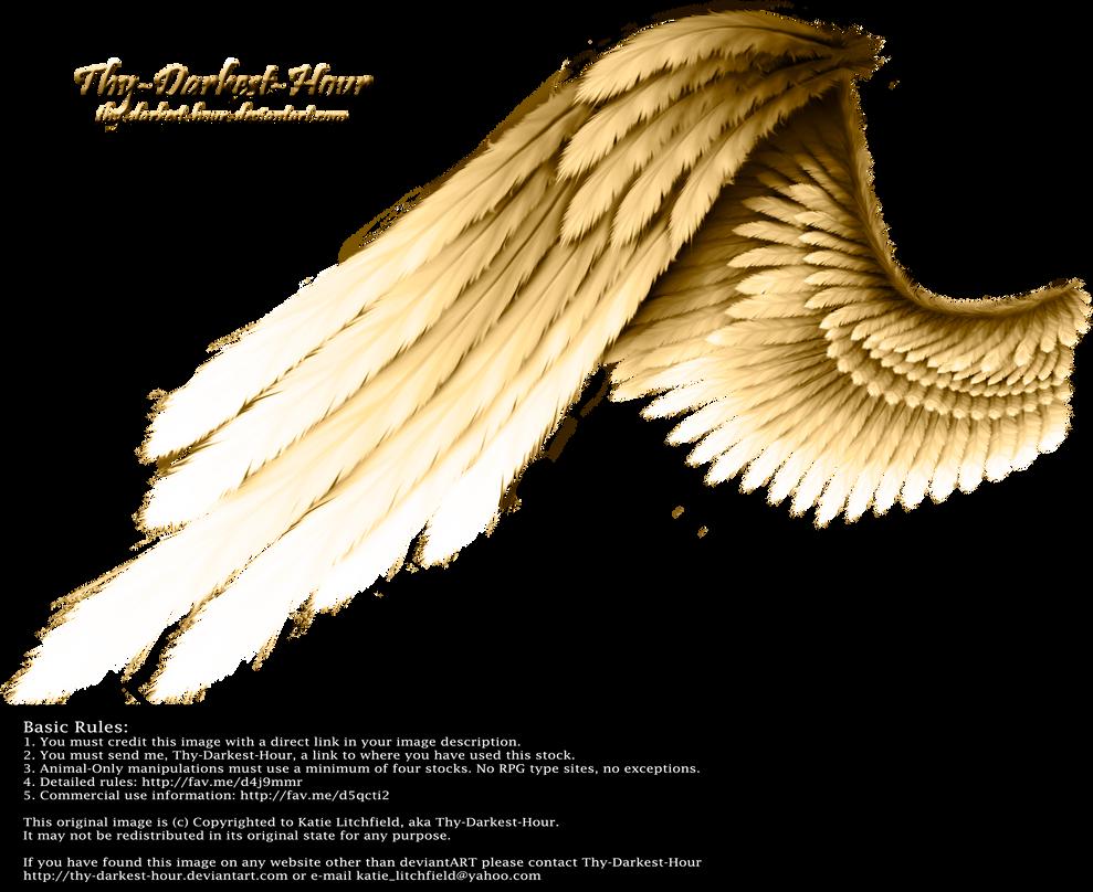 Contrast Wing - Golden by Thy-Darkest-Hour