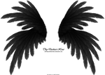 Frilled Wings - Black