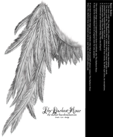 Draped Wing - Silver by Thy-Darkest-Hour