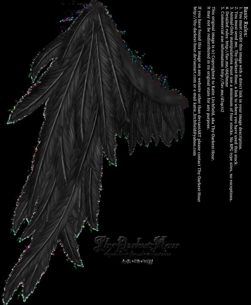 Draped Wing - Black by Thy-Darkest-Hour