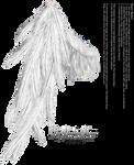 Draped Wing - White