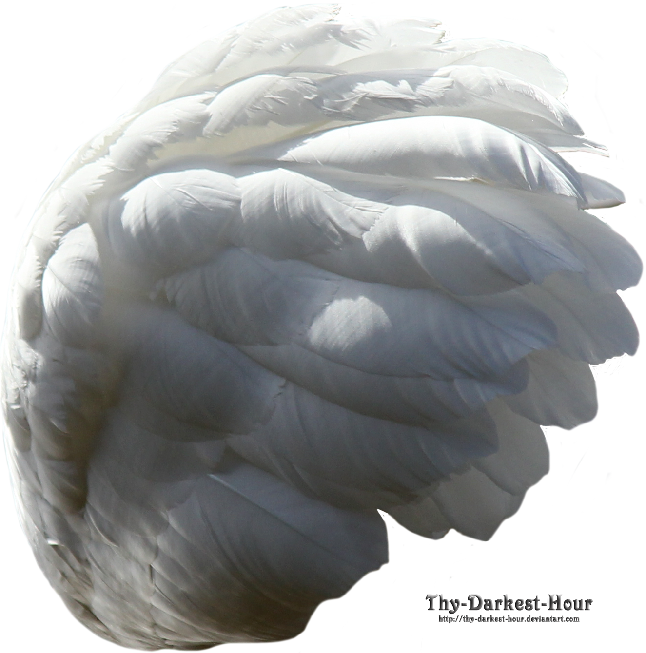 Swan Wing - White by Thy-Darkest-Hour