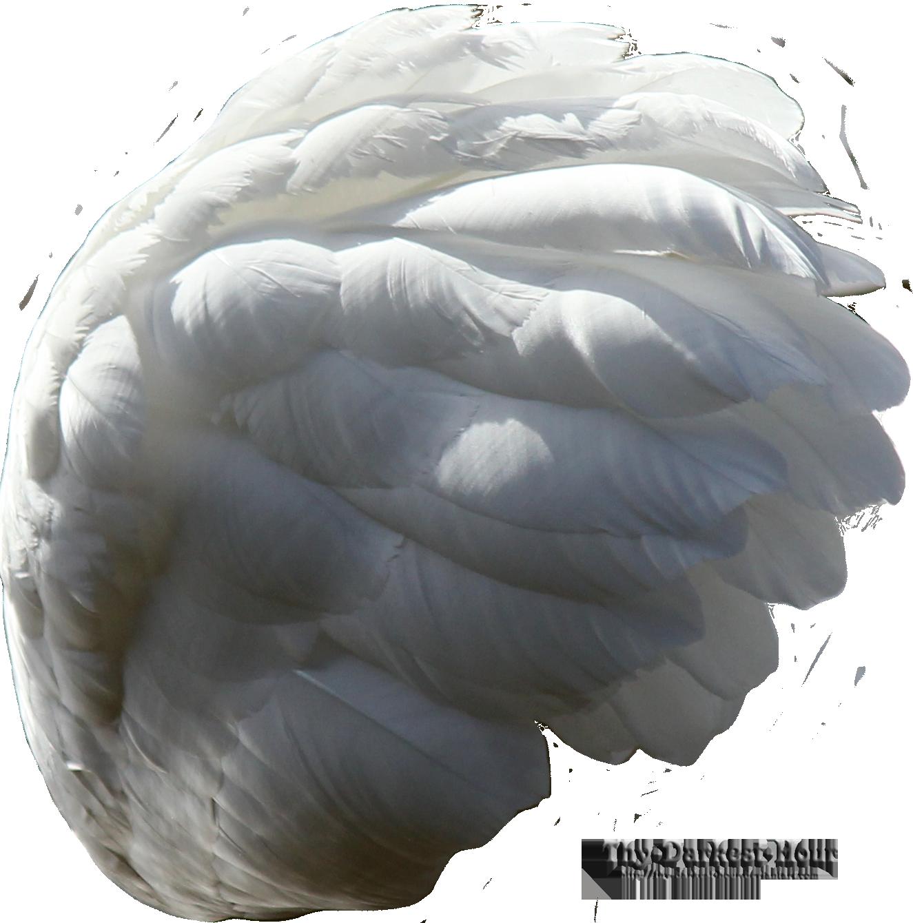 Swan Wing - White by Thy-Darkest-Hour