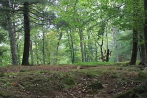 Northbend Forest 08 by Thy-Darkest-Hour
