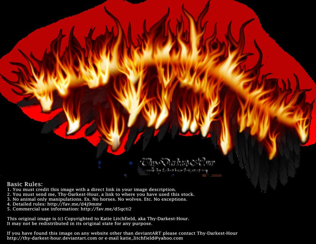 Wings on Fire - Black 01 by Thy-Darkest-Hour