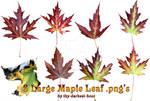 Maple Leaves Pack 1