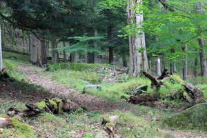 Northbend Forest 19 by Thy-Darkest-Hour