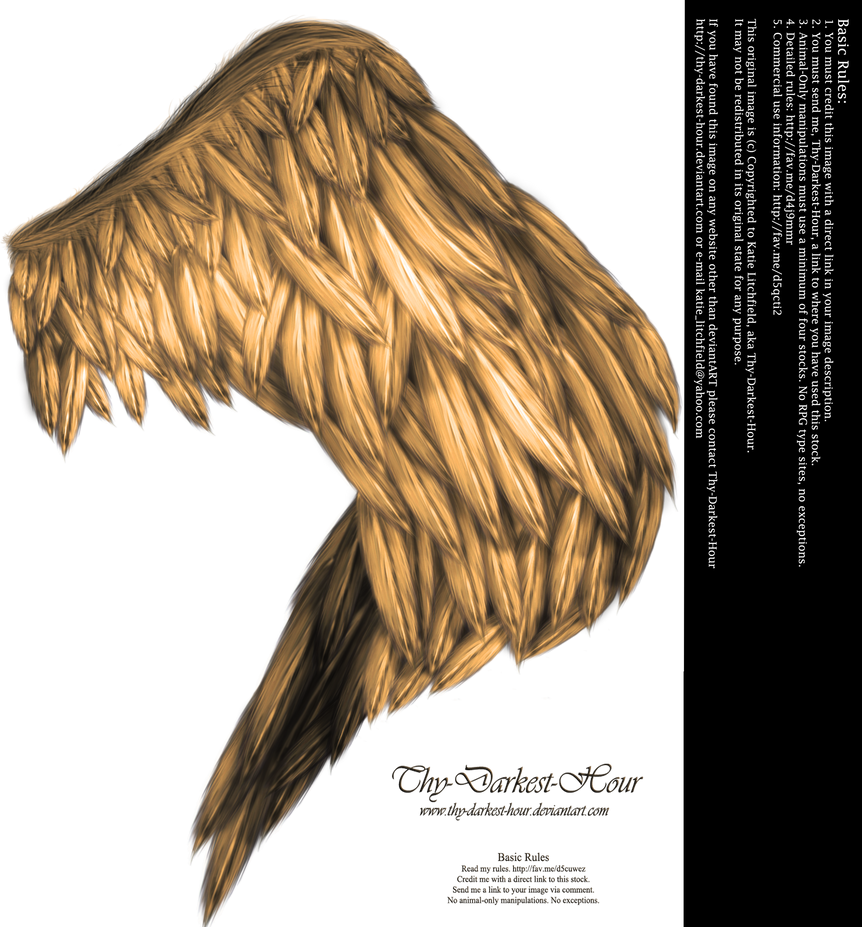 Wings of Fancy - Golden by Thy-Darkest-Hour