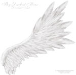 Flared Wing - White