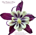 Purple and Cream Colombine PNG